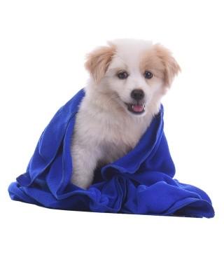Toalla para perros / Talla S